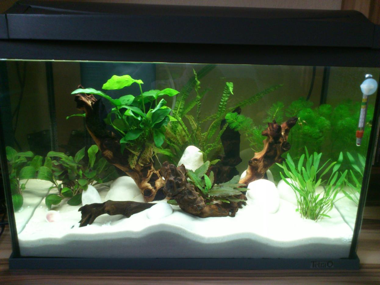 Einrichten eines süßwasseraquariums