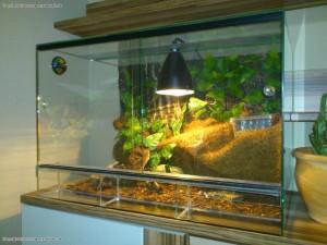 Glasterrarium fuer kleine Hausgeckos