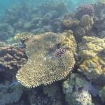 Korallen Aegypten Rotes Meer