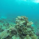 Korallen Rotes Meer