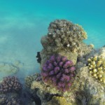 Korallen des Roten Meeres Aegypten