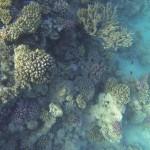 Korallen vor Hurghada