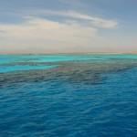 Korallenbaenke bei Giftun Island AMAZING