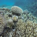 Korallenparadies Rotes Meer