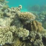 Korallenwelt Rotes Meer
