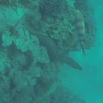 Muraene Rotes Meer
