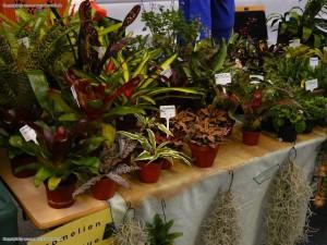 Pflanzen die fuers Terrarium geeignet sind
