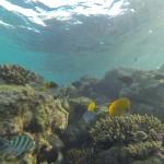 Unterwasserwelt Rotes Meer Red Sea Aegypten Egypt