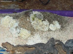 Vermiculit Brutstellen fuer die Eiablage