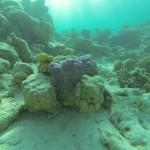blau lila farbene Koralle