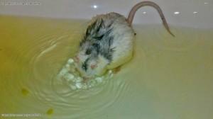 die arme kraenkelnde Mini muss ein Bad nehmen (Foto von Iris)