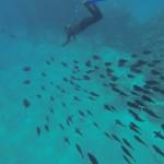 grosser Fischschwarm angelockt von Futter