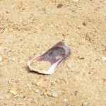 kleine Muschel am Strand