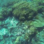 unterschiedliche Korallen aber wenig bunt vor Hurghada