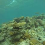 verschiedene Korallen vor Hurghada Aegypten